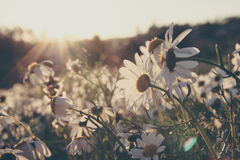 Faded spring Royalty Free Stock Photos