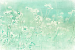 Faded Summer meadow on coconut paper. Textured art print stock photography