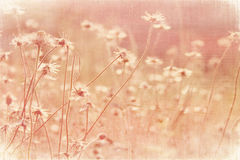 Faded Summer meadow on coconut paper stock photography