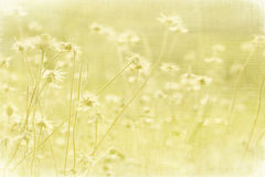 Faded Summer meadow on coconut paper. Textured art print stock image