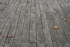 Faded Sycamore Leaves On Wooden Floor Tiles stock photography