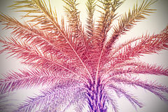 Faded vintage retro filtered palm background Stock Photos