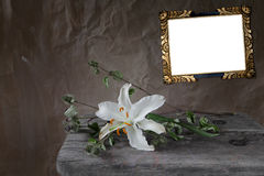 Faded white lily with vintage picture frame Royalty Free Stock Photography