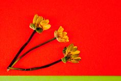 The faded yellow flowers on orange background stock photo