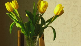 Faded yellow tulip buds raised. After the addition of fresh water in the vase, timelapse stock video
