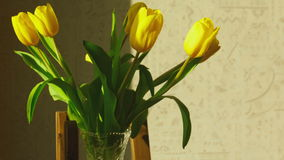 Faded yellow tulip buds raised. After the addition of fresh water in the vase, timelapse stock video footage