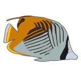 Fadenfisch Butterflyfish-Vektor-Illustration Lizenzfreies Stockfoto
