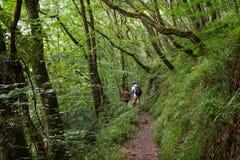 Fader och barn som går en skogbana arkivbilder