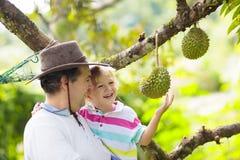 Fader och barn som väljer durianen från träd royaltyfri fotografi