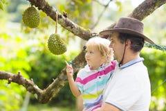 Fader och barn som väljer durianen från träd royaltyfri bild