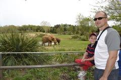 Fader och son på zoo Fotografering för Bildbyråer