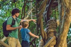 Fader och son som håller ögonen på tropiska lianer i våta tropiska skogar Royaltyfri Fotografi