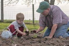Fader och son som planterar tomater Arkivbilder