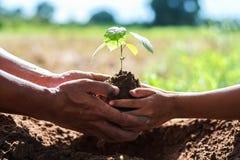 fadern och barn hjälper att plantera träd för att hjälpa att förminska global warmi arkivfoton
