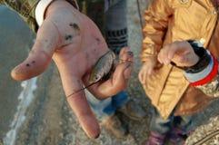 Fadern visar barn en liten fisk royaltyfri bild