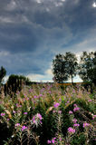 Fades Fireweed. Summer. Average Strip of Russia, near Moscow Stock Photo
