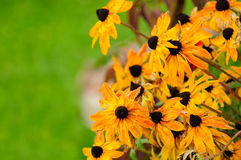 Fading Autumn Flowers Royalty Free Stock Images