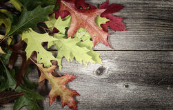 Fading autumn Leaves on Age Wood Royalty Free Stock Photos