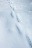 Fading footprints in the snow Royalty Free Stock Photos