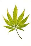 Fading Leaf Stock Image