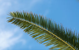 Fading Palm Royalty Free Stock Photography
