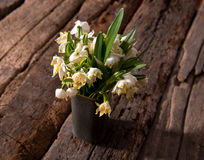 Fading snowdrops in vase Stock Images