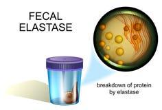 Faecale elastase coprology Stock Foto's