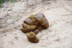 Faeces of water buffalo on ground Stock Images