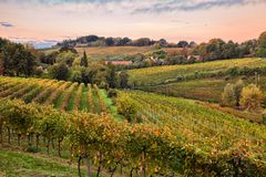 Faenza, Ravenna, Emilia Romagna, Italy: landscape at dawn of the. Countryside with vineyards for wine production on the Italian hills stock photos