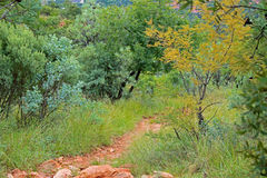 FAERIE GLEN HIKING TRAIL. Hiking trail flanked by vegetation stock photo