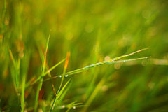 Faerie lights grass Royalty Free Stock Photo