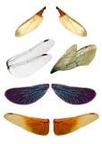 Faeries wings Stock Image