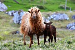 Faeroe Islands Stock Image