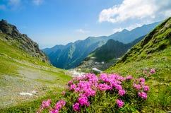 Fagaras山,有绿草的喀尔巴汗和岩石、峰顶Negoiu和Moldoveanu,罗马尼亚,欧洲 免版税库存图片