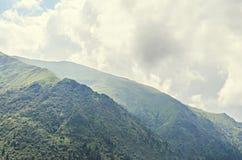 Fagaras góry, Carpathians z zieloną trawą i sosna lasami Zdjęcia Royalty Free