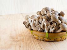 Faggio di Brown, funghi di shimeji di Buna Fotografia Stock