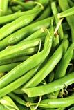 Fagioli asparagi Immagini Stock
