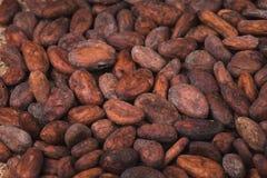Fagioli crudi del cacao o del cacao immagini stock