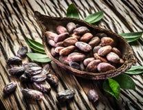 Fagioli del baccello e di cocao del cacao immagini stock