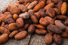 Fagioli del cacao Fotografie Stock