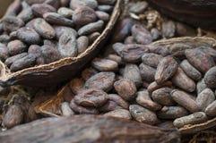 Fagioli del cacao immagine stock