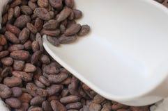 Fagioli del cacao immagini stock