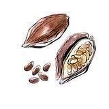 Fagioli del cacao dell'acquerello di vettore Fotografia Stock