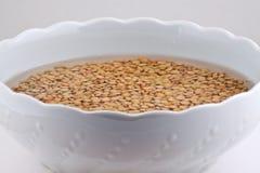 Fagioli della lenticchia in ciotola bianca Fotografia Stock