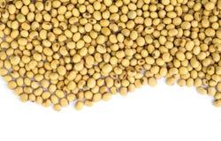 Fagioli della soia. Fotografia Stock Libera da Diritti
