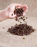 Fagioli di Coffe che cadono dalla mano Fotografia Stock Libera da Diritti