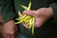 Fagioli gialli Fotografia Stock Libera da Diritti