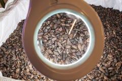 Fagioli grezzi del cacao fotografia stock