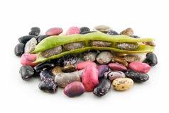 Fagioli maturi con il seme ed i fogli isolati Immagine Stock