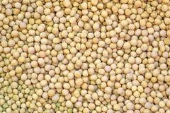 Fagioli maturi della soia come fondo Immagini Stock